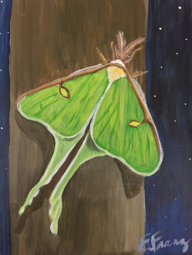 Luna.moth